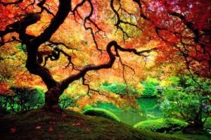 beautiful-nature-wallpapers-3