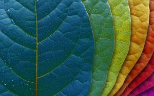 సకల సృష్టికి మూలాధారం అల్లాహ్యే. ఆయన తన యుక్తినీ, ప్రణాళికను గురించి తన సృష్టితాలలో ఎవరికేది అవసరమో తగు మోతాదులో నిర్థారించాడు.